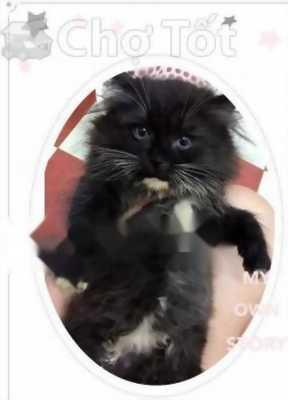 Mèo ALD x 34