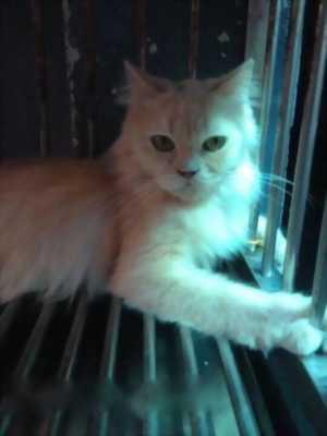 Tìm chủ mới cho bé mèo ALD