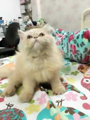 Bán nhanh chú mèo ALD x 34 kute