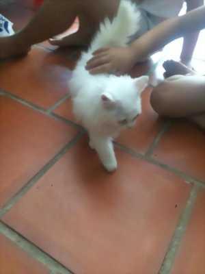 Mèo ALD 2 tháng tuổi, cực đáng yêu nhé