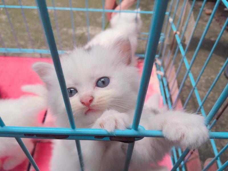 Nhượng lại mèo ald đực