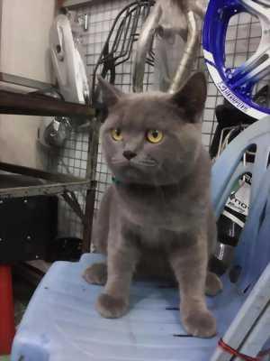 Bán mèo Mèo Aln