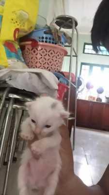 Mèo ba 4