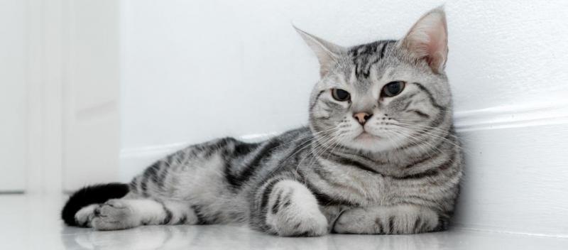 Cho tặng mèo đẹp tại Bình Dương