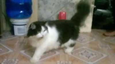 Cần bán lại và bán gấp em mèo Ba Tư lai Nga dễ thương
