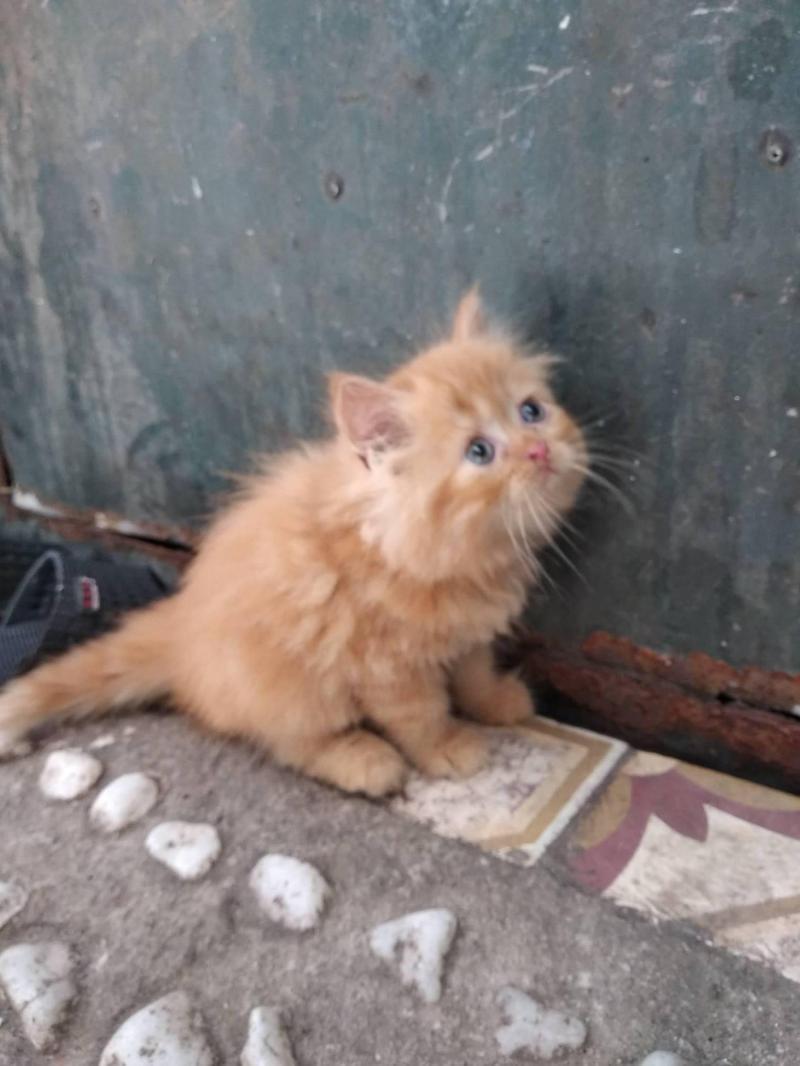 Mèo 34 Ald