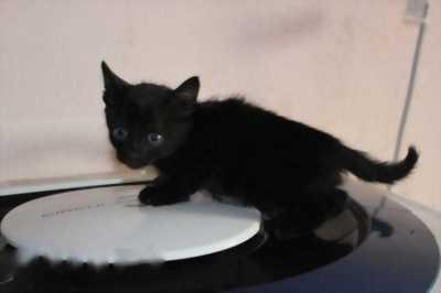 Cho mèo mun con, lh 0909659068