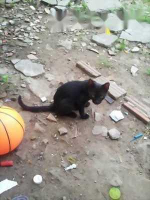 Cần bán e mèo mun
