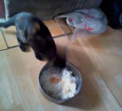 Bán cặp mèo Mun