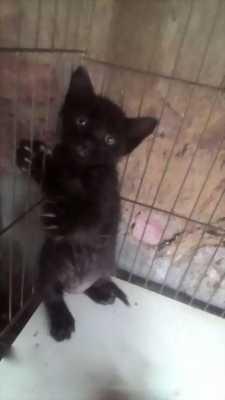 Mình cần bán lại mấy em mèo xinh xắn dễ thương giá bao rẻ cho anh em
