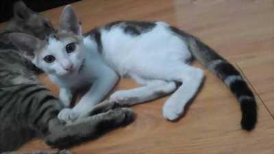 Kiếm chủ mới cho 2 bé mèo dễ thương không nhát người