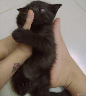 Mẻ mèo đen