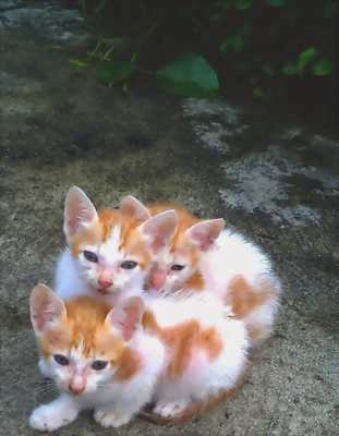 Mèo đẹp 200k/ 2 con