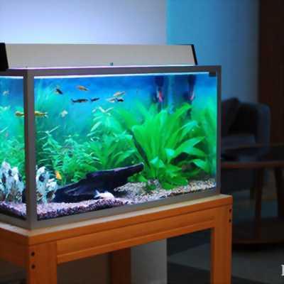 Bể cá đúc đầy đủ phụ kiện như hình
