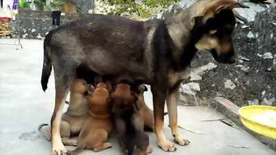 Chó con đẹp