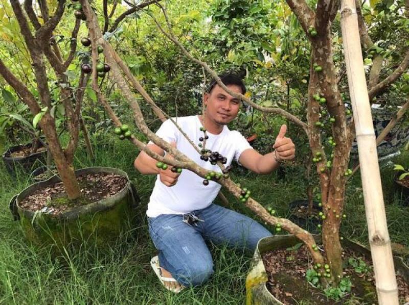 Nho thân gỗ - Loại cây phong thủy cho sự sung túc và đủ đầy