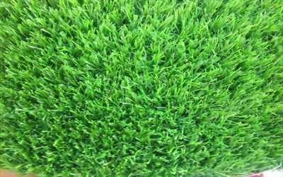 Thảm cỏ trang trang trí sân vườn