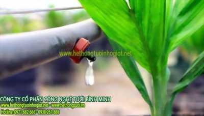 tưới nhỏ giọt Bình Minh,hệ thống tưới nhỏ giọt Bình Minh,tưới nhỏ giọt tự động công ty Bình Minh
