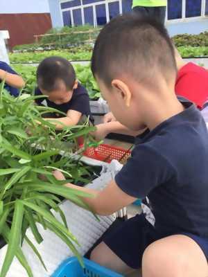Vườn rau xanh độc đáo trên sân thượng