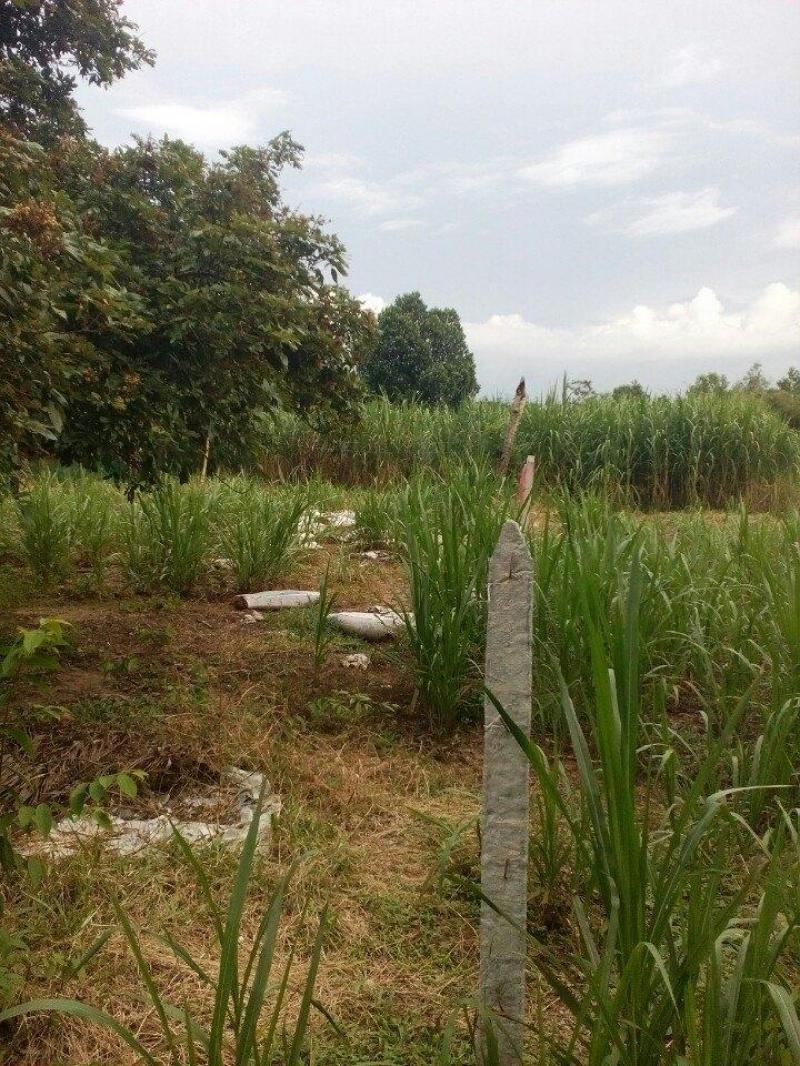 Bán nhà mặt tiền và đất tại Xã An Nhơn Tây, Huyện Củ Chi