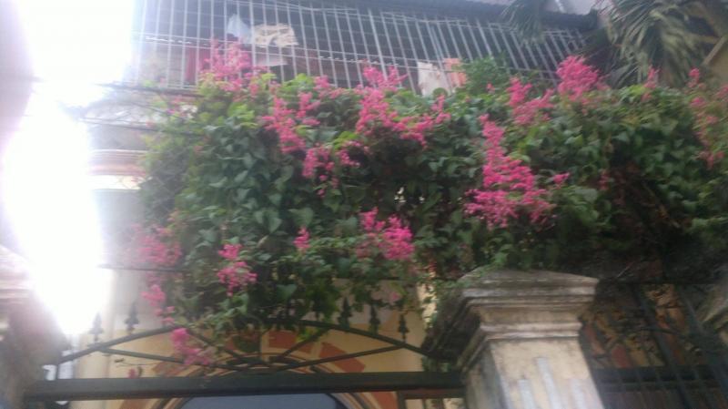 Cần bán nhà đường nguyễn trãi tp Thái Bình