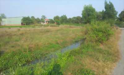 Đất đầu tư xã Hưng Long Bình Chánh 1850m2 ĐƯỜNG 12M bán gấp.