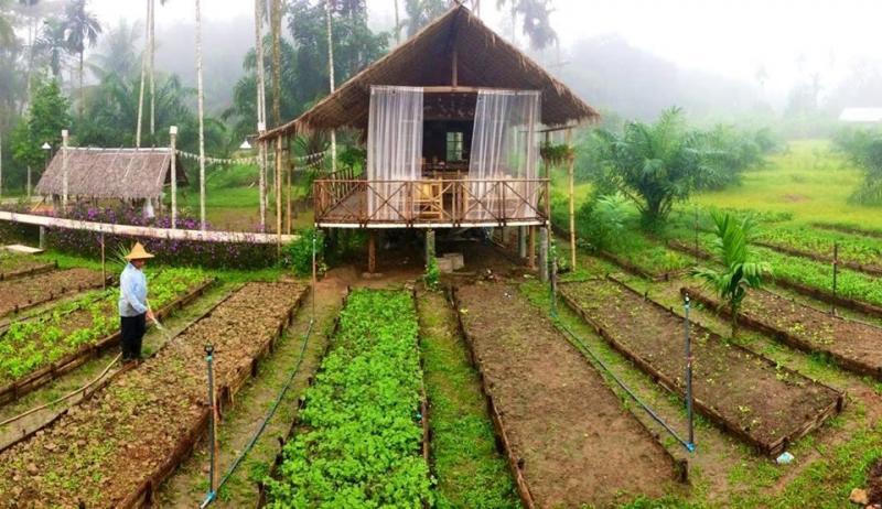 Cần thanh lý trang trại vườn ao chuồng, quy mô 4000 heo