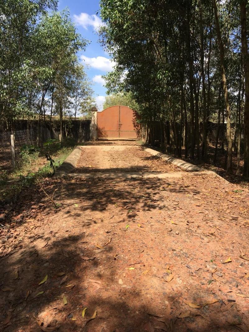 Cho thuê trại nuôi bò tại Xuân Lộc, Đồng Nai