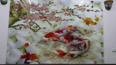 Gạch tranh cá Koi 3d