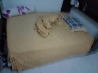 Cần bán giường