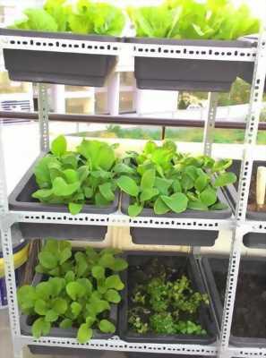 Cung cấp kệ sắt trồng rau giá rẻ tại sài gòn