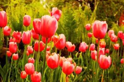 Tranh gạch men 3D vườn hoa tuy lip
