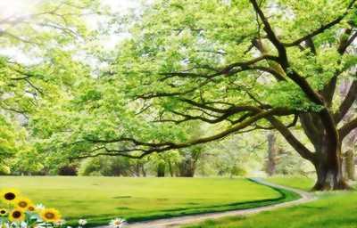 Tranh gạch men 3D cây cổ thụ xanh