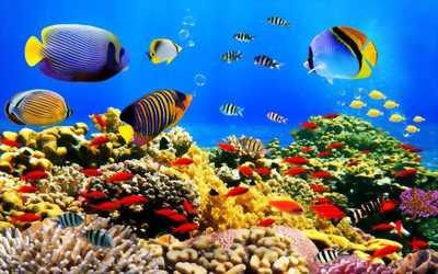 Tranh dán tường 3d phong cảnh đại dương bao la