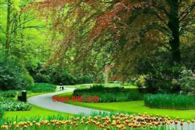 tranh 3d vườn cây cối - gạch tranh 3d