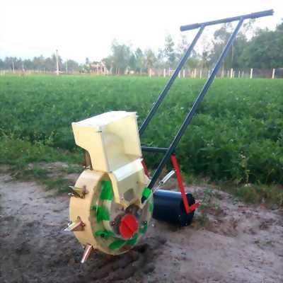 Kỹ thuật trồng đậu phộng hiệu quả