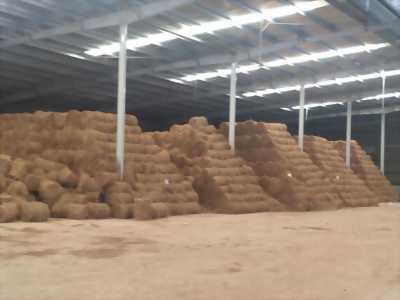 Chuyên bán : Rơm cuộn cho bò ăn, lót trái cây, tủ gốc