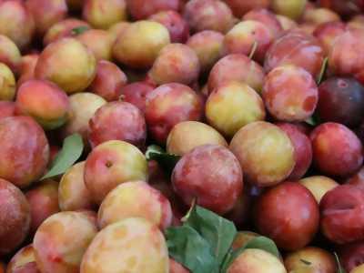 SUN FARM- Hoa quả bốn mùa- Trái cây đặc sản