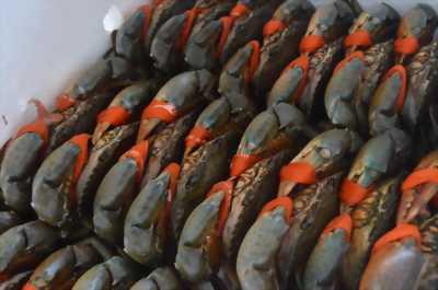 Cua biển thiên nhiên giá chỉ từ 220k