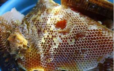 Mật ong rừng và bột nghệ