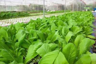 Bán rau sạch nhà trồng - chất lượng - anh toàn với sức khoẻ