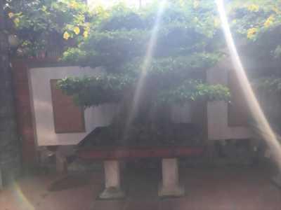 Cần bán cây cảnh