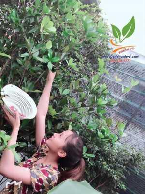 Cây giống cherry brazil- dễ trồng dễ chăm sóc