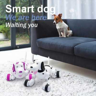 Smart dog chú chó thông minh
