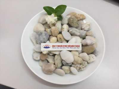 Chuyên cung cấp sỏi đá trang trí