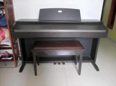 Piano Điện CELVIANO Phím Cảm Ứng Led