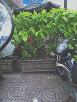 Bán xe quận Tân Bình