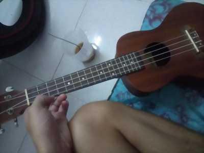 Bán Đàn ukulele