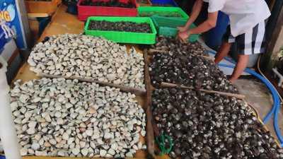 Nghêu sò ốc hến các loại, GIAO HÀNG KHU VỰC TT CẦN GIUỘC