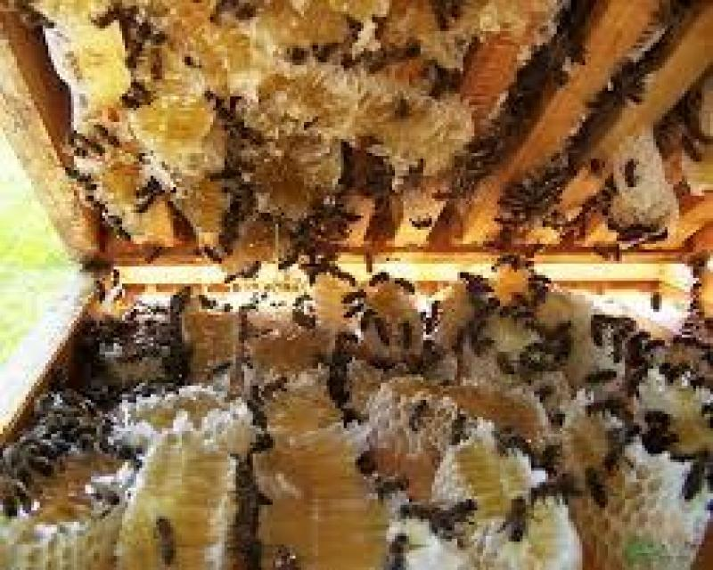 Bán mật ong rừng Nguyên chất Gia Lai